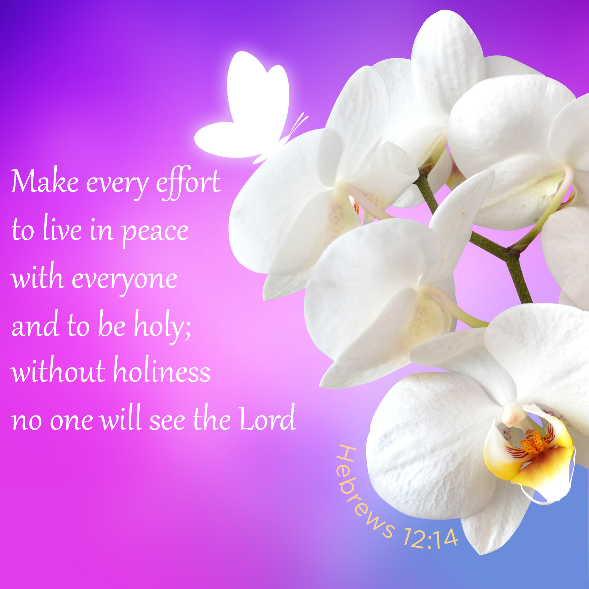 Hebrews 12:14 scripture picture